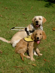 2 Service Dogs