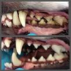 Doggy dental care (2)