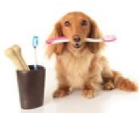 Doggy dental care