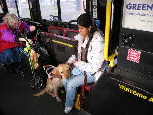 Service Dogs & Canine Good Citizen