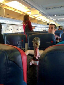 Turkey on Plane